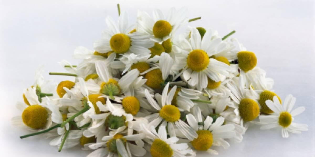 Tomar hierbas aromáticas podría 'mejorar tu cerebro'