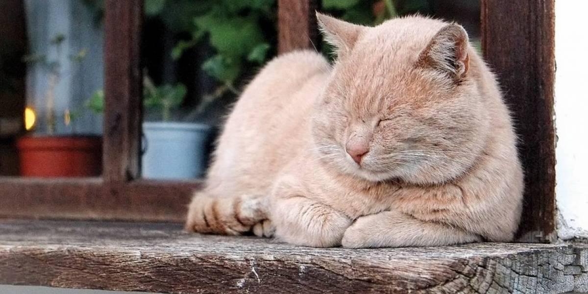Abandono e capacidade de reprodução explicam aumento de gatos no Zoológico