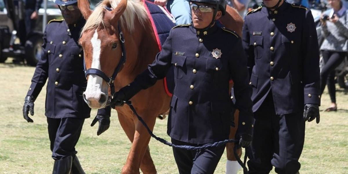 Nuevos caballos para terapias de la Policía Metropolitana