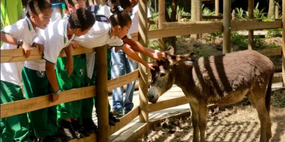 El Zoológico Santa Fe de Medellín estrena la Zoo Granja