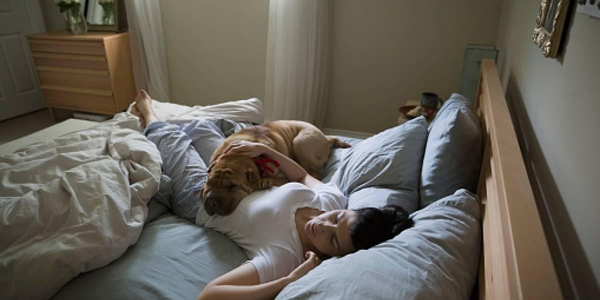 Dormir con tu perro no es tan malo como pensabas