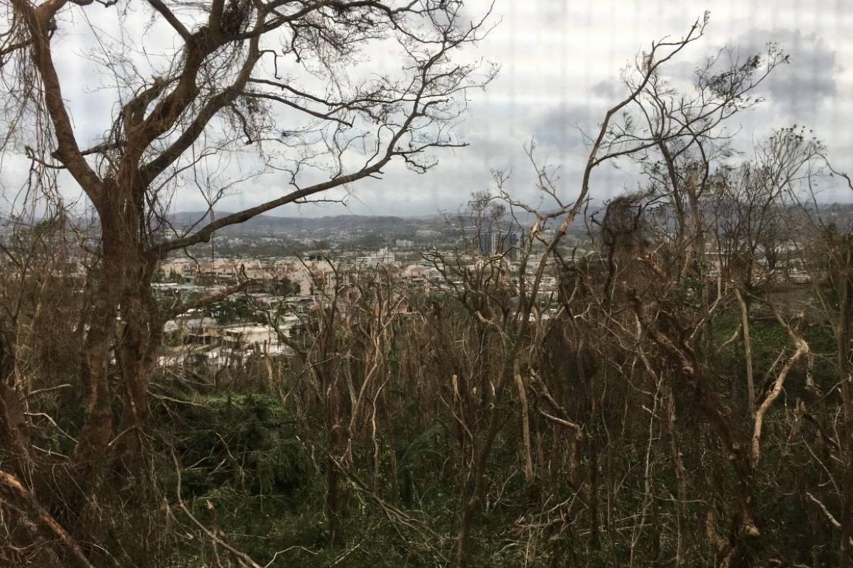 Impactada la vegetación en Condominio Colinas del Norte Metro Puerto Rico