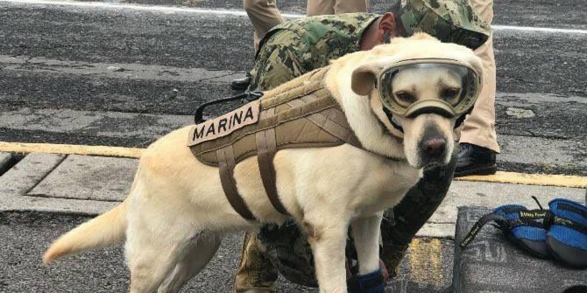 Usuarios en redes piden a la Marina dejar de exhibir a la perrita Frida