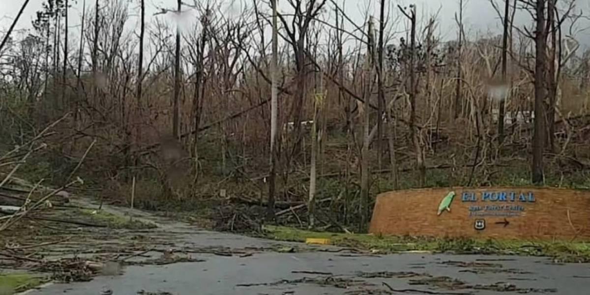 Irreconocible El Yunque luego de azote del huracán María