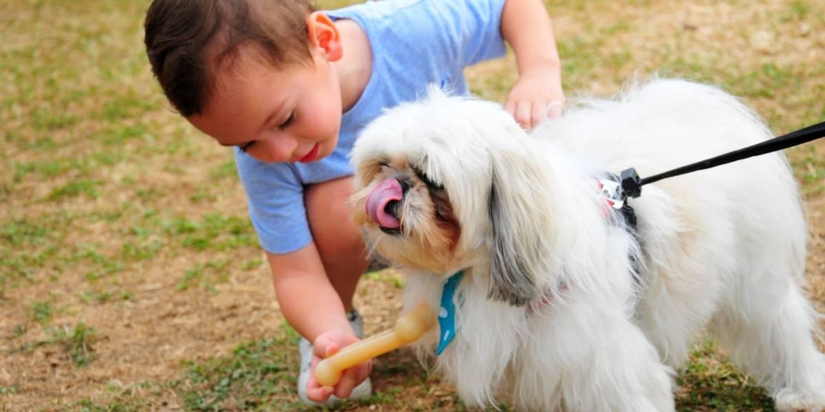 Feria Gye Mascotas educa sobre  el buen trato a los animales