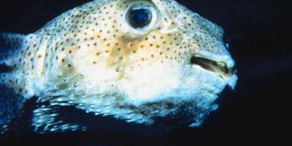 """Estudio revela que los peces tienen una """"personalidad compleja"""""""