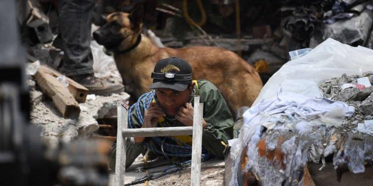 """""""No al uso de perros como herramientas"""": polémica en México por mensaje contra trabajo de animales en rescate de víctimas del terremoto"""
