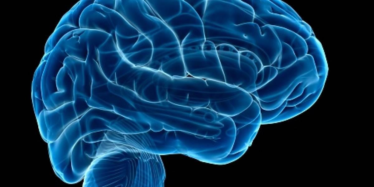 Conectan por primera vez a un cerebro con internet