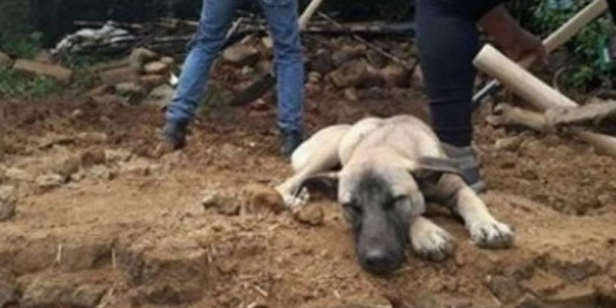 """""""Jacinto"""", el perro que sigue esperando a su dueño sobre los escombros del terremoto"""