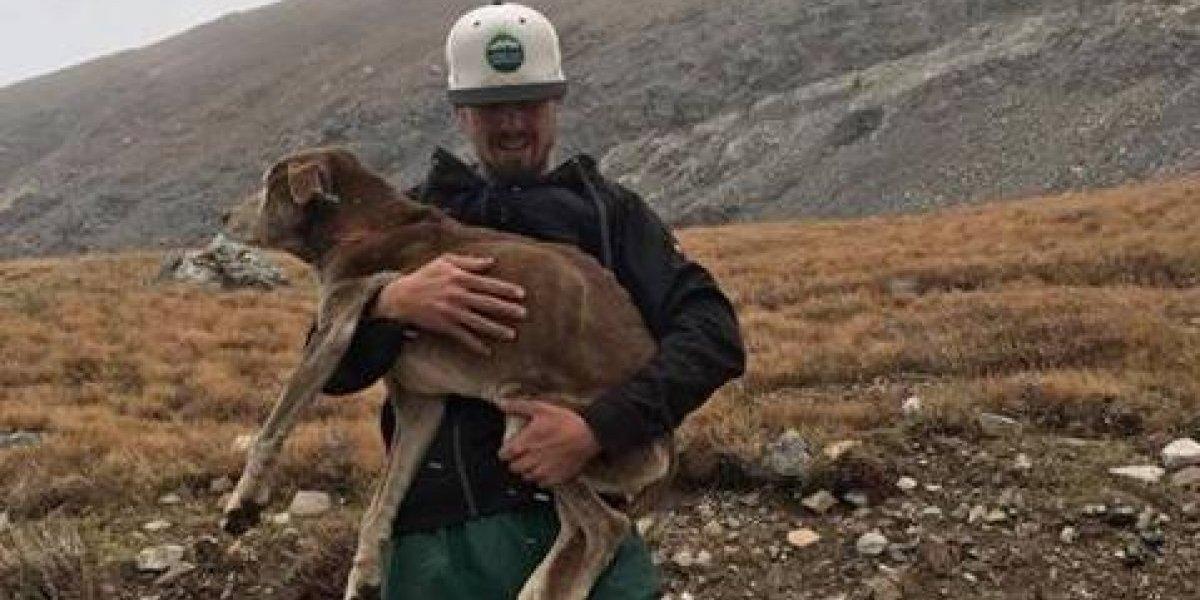 """Escucharon rumores de un perro """"llorando"""" en la montaña y lograron rescatarlo luego de 6 semanas desaparecido"""
