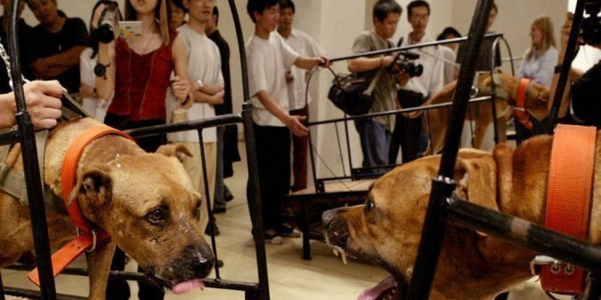 Acusados de maltrato animal: El Guggenheim de Nueva York retira tres obras con animales vivos