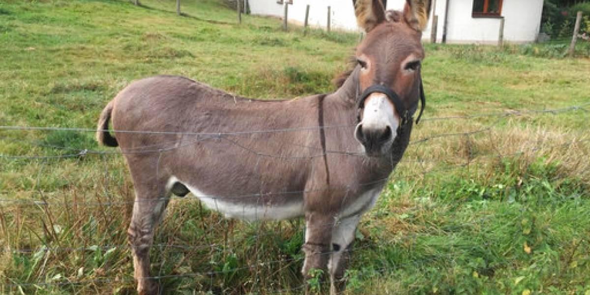 Demandan al dueño de un burro que dañó un lujoso auto deportivo McLaren