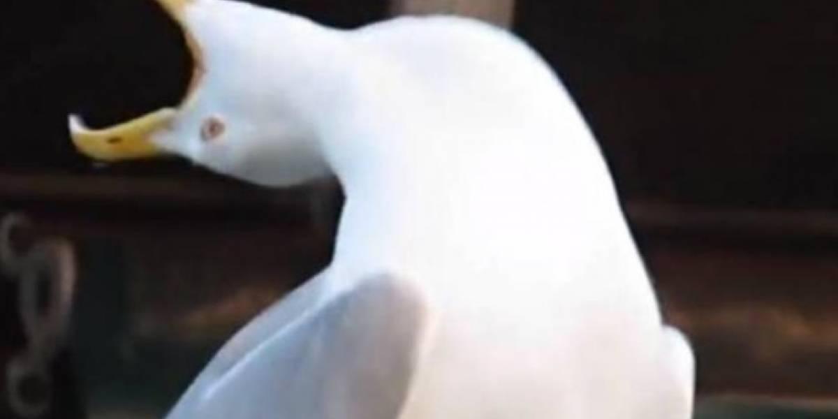 ¿Cuál es el origen del meme de la 'gaviota intensa'?