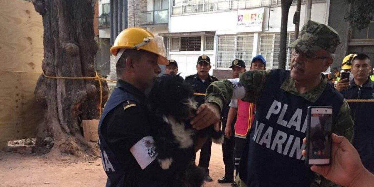 Conoce al perrito rescatado tras terremoto en México