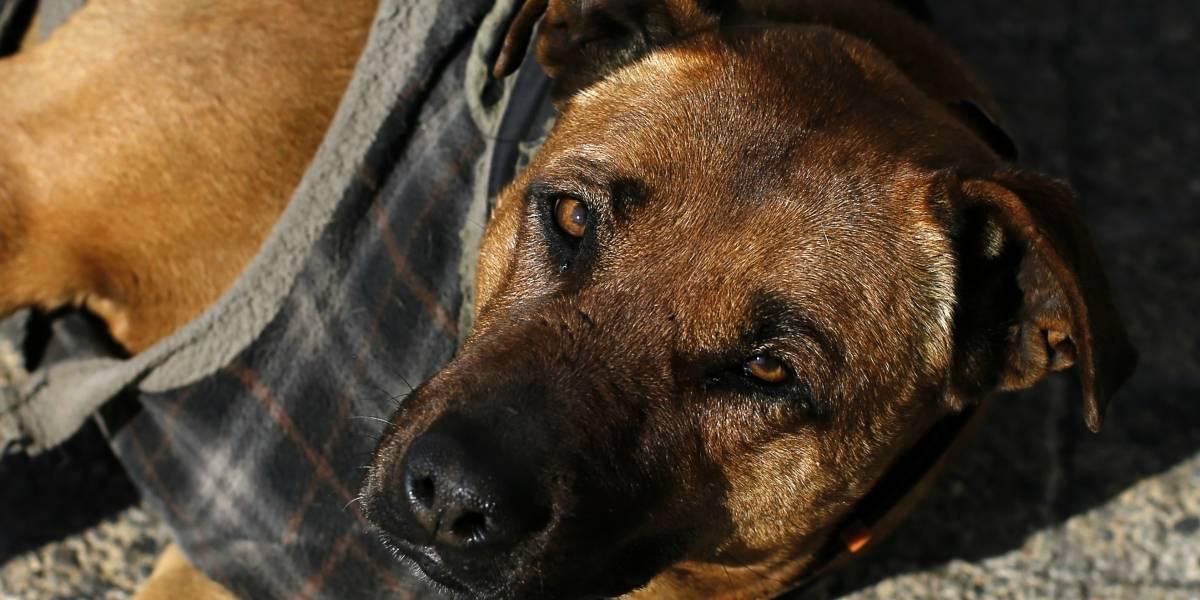 Terrible maltrato animal: encontraron 12 perros desnutridos, deshidratados y llenos de fecas en departamento de Providencia