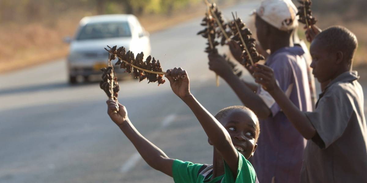 Niños venden 10 ratones asados por $1 en Zimbabue