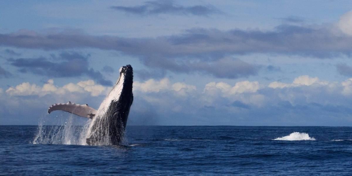 Ballenas, otras afectadas por el paro de Avianca