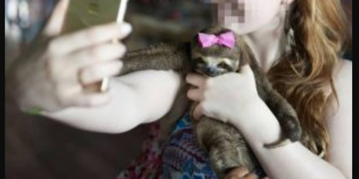 ONG denuncia que las selfies son una forma de crueldad contra los animales