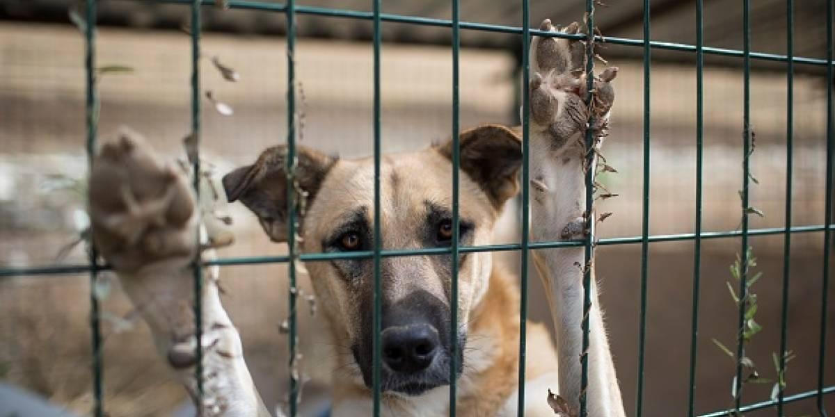Mujer asesina perrito con agua hirviendo porque se le orinaba en la reja