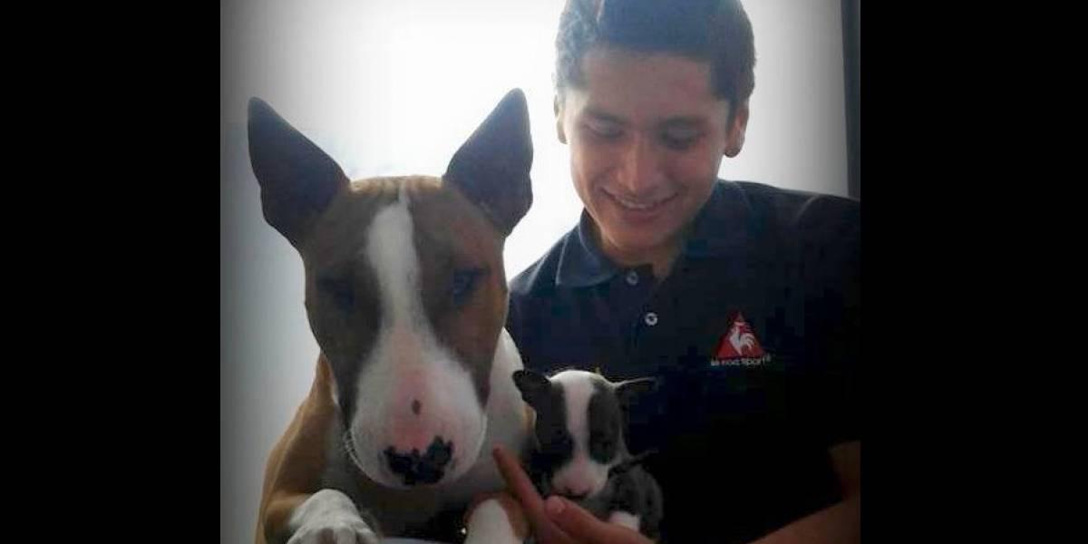 ¡Triste noticia! Falleció el dueño de Dominic, el perro ahorcado en Pitalito