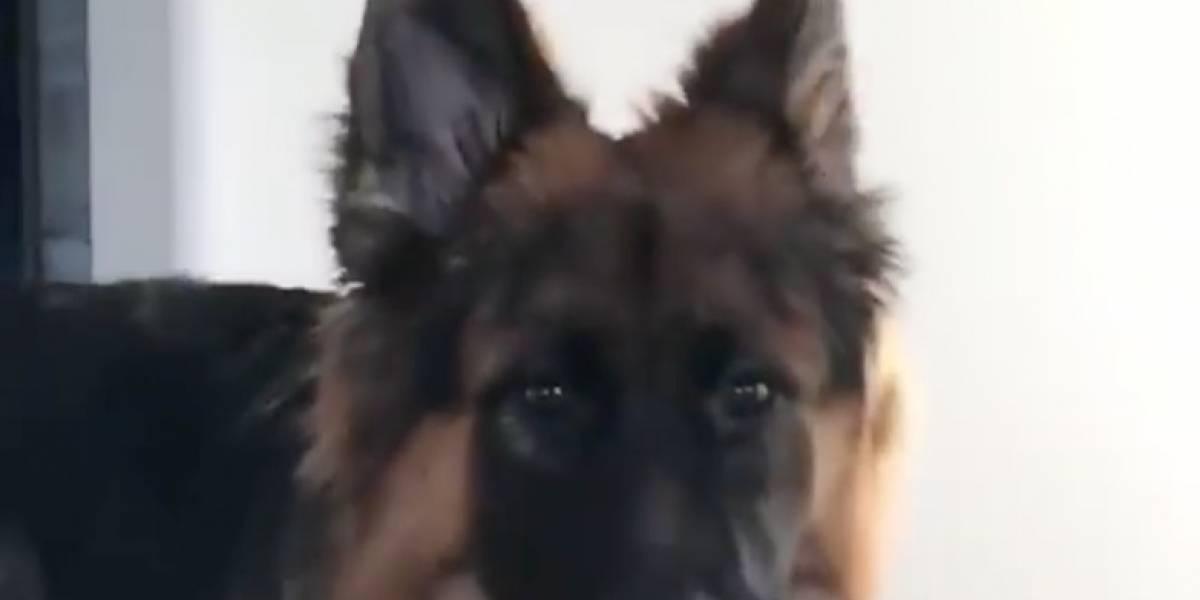 Video: Guiño de perro 'coqueto' se viraliza en las redes