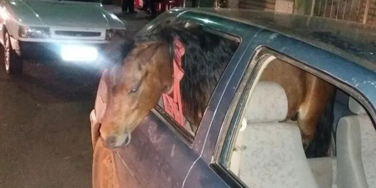 Motorista embriagado é preso depois de levar pônei para passear de carro