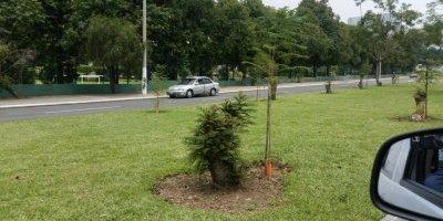 Renacen árboles en bulevar Juan Pablo II