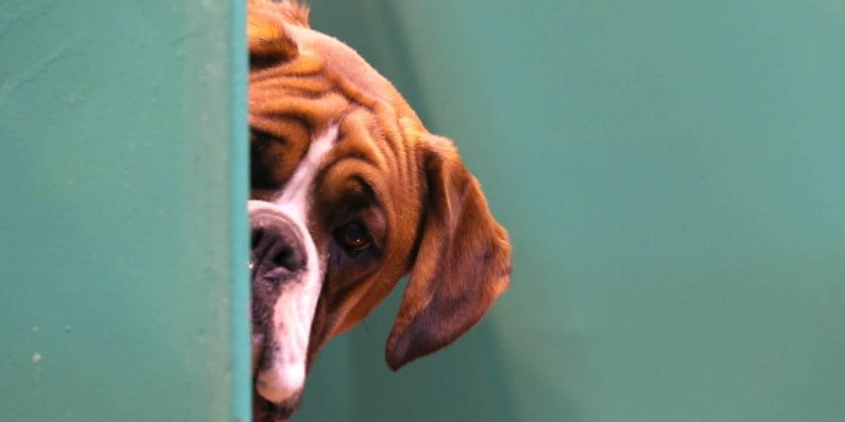 ¿Impunidad para los responsables que envenenan los perros en Bogotá?