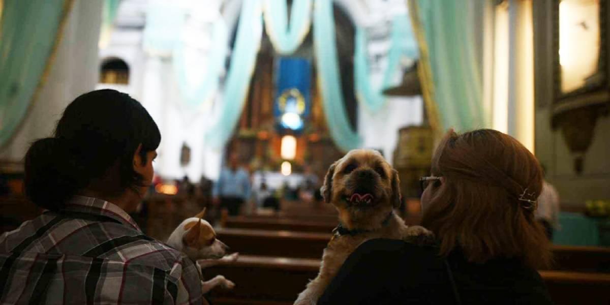 Bendicen mascotas por el Día Mundial de los Animales en la festividad de San Francisco de Asís