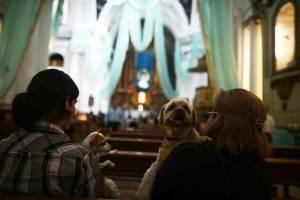 Bendición de animales en Iglesia de San Francisco