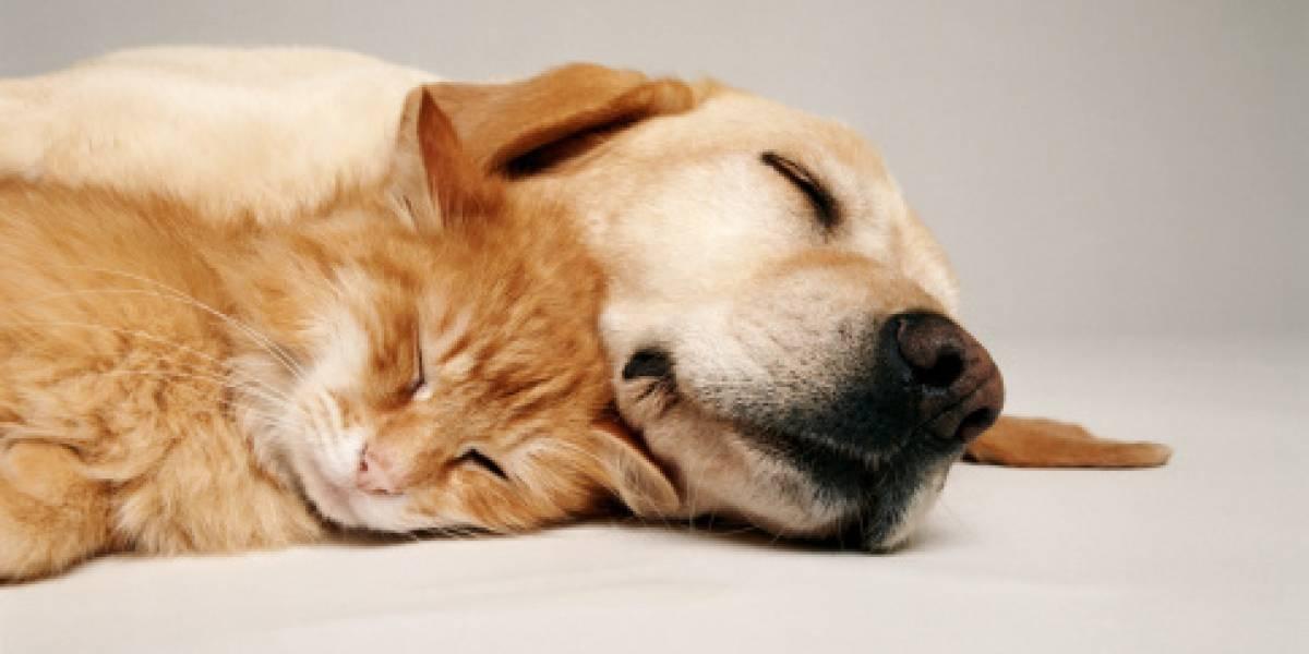 Cáncer: una enfermedad que también afecta a las mascotas