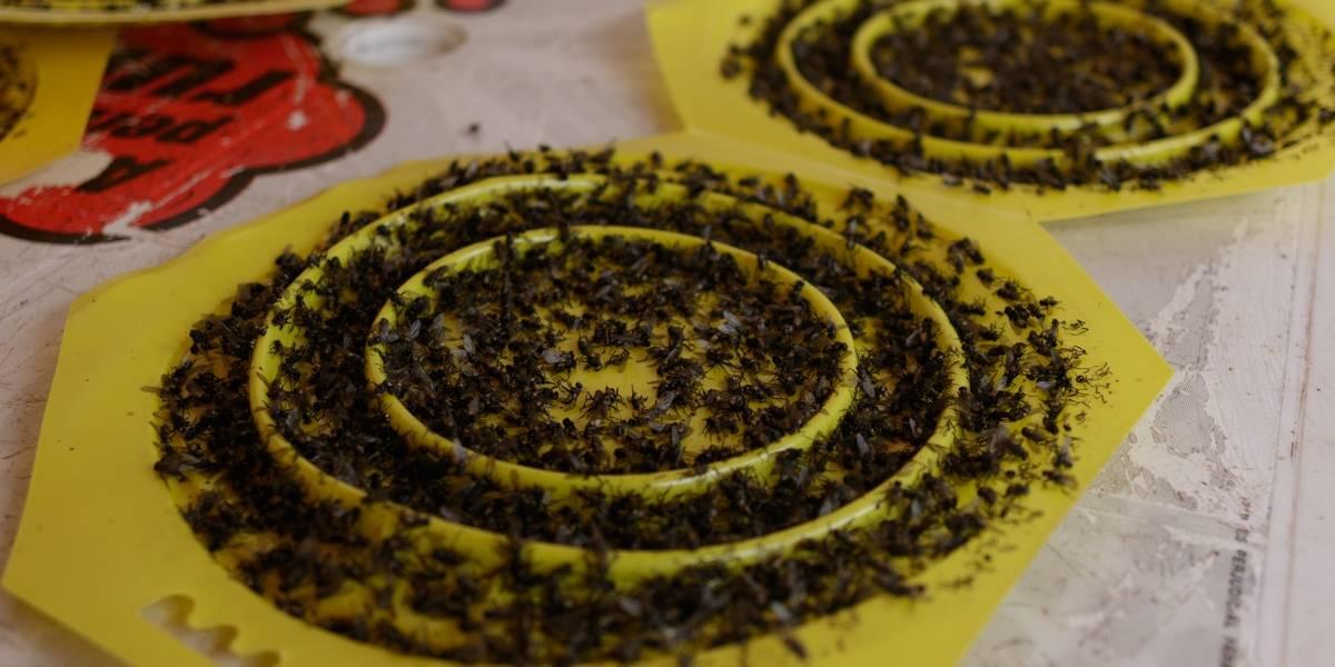 Las moscas y malos olores tienen desesperada a la comunidad que colinda con Doña Juana