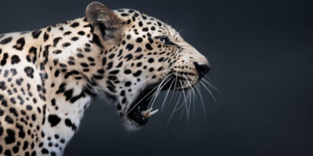Encuentran a leopardo en una fábrica de India
