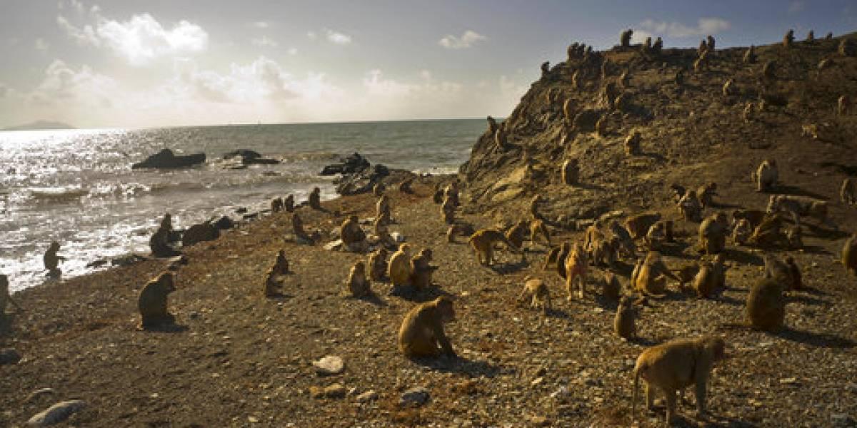 María devasta la Isla de los Monos