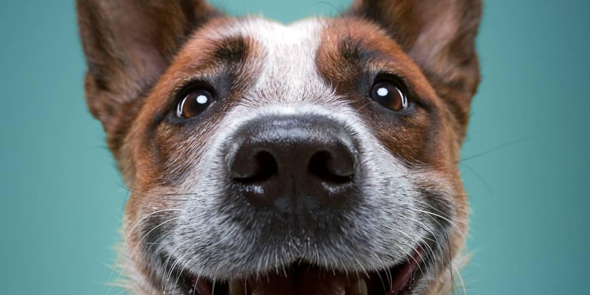Perritos muestran divertidas actitudes humanas