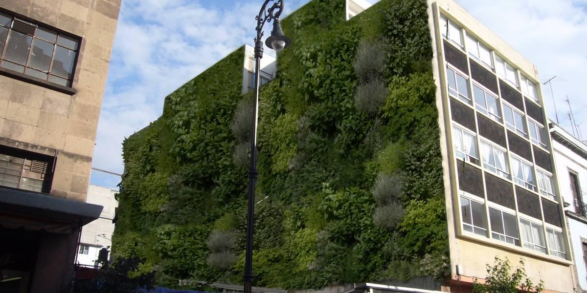 Muros verdes se toman Santiago: generan oxígeno, reducen el ruido y atrapan el smog