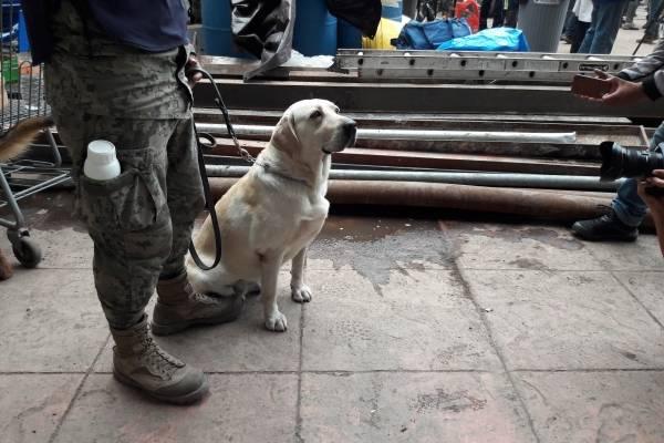 Usuarios exigen dejar de exhibir a la perrita Frida