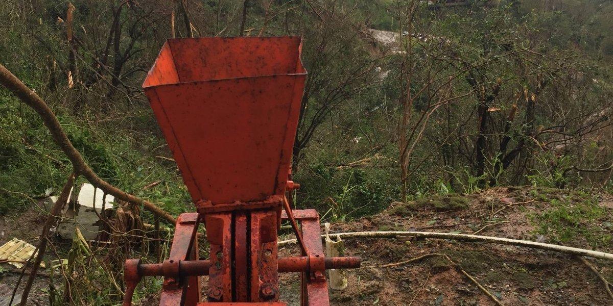 Industria del café podría tardar tres años en recuperarse
