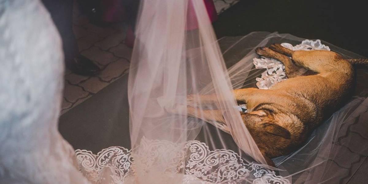 Cachorro que deitou em véu noiva durante casamento é adotado pelos noivos
