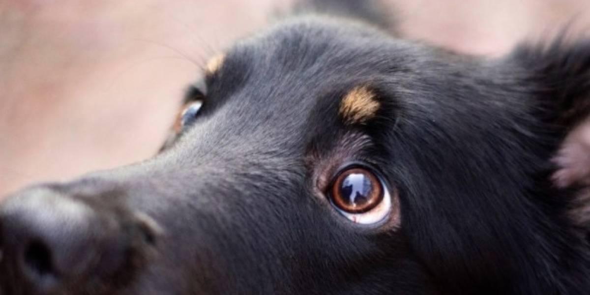Hombre se implantó la cara de un perro