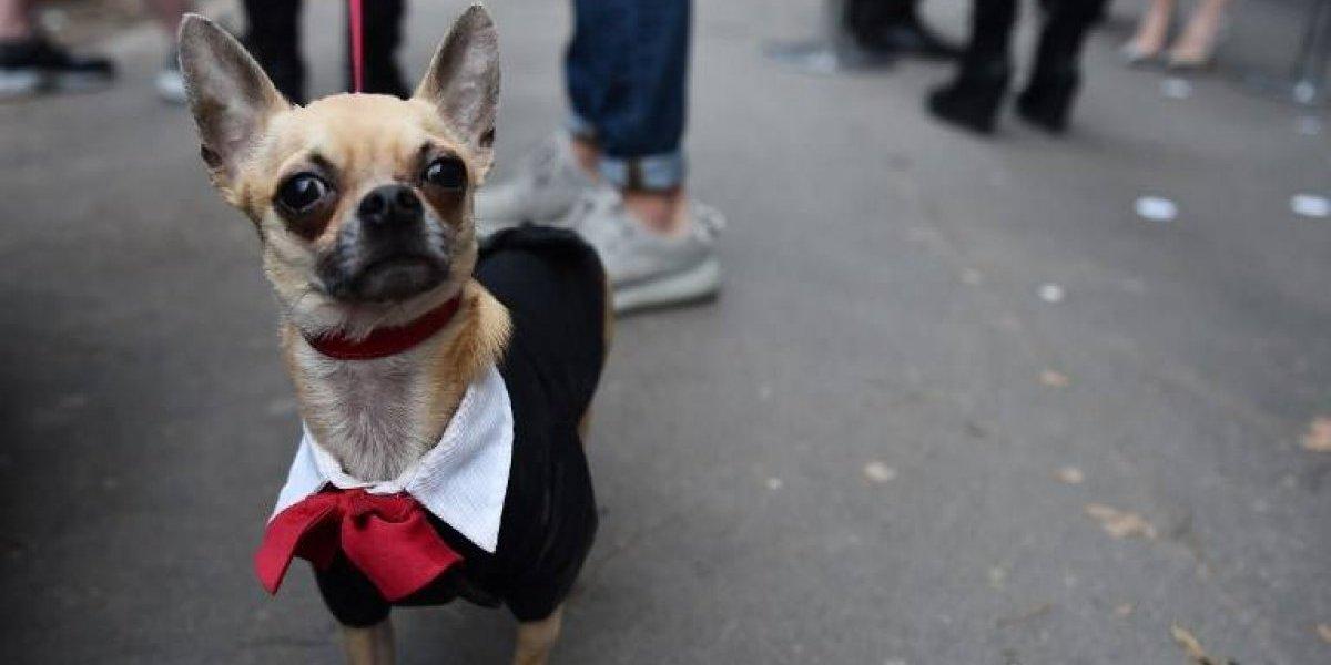 """Atención """"dog lovers"""": En Italia otorgan dos días libres a una mujer para cuidar a su perro"""