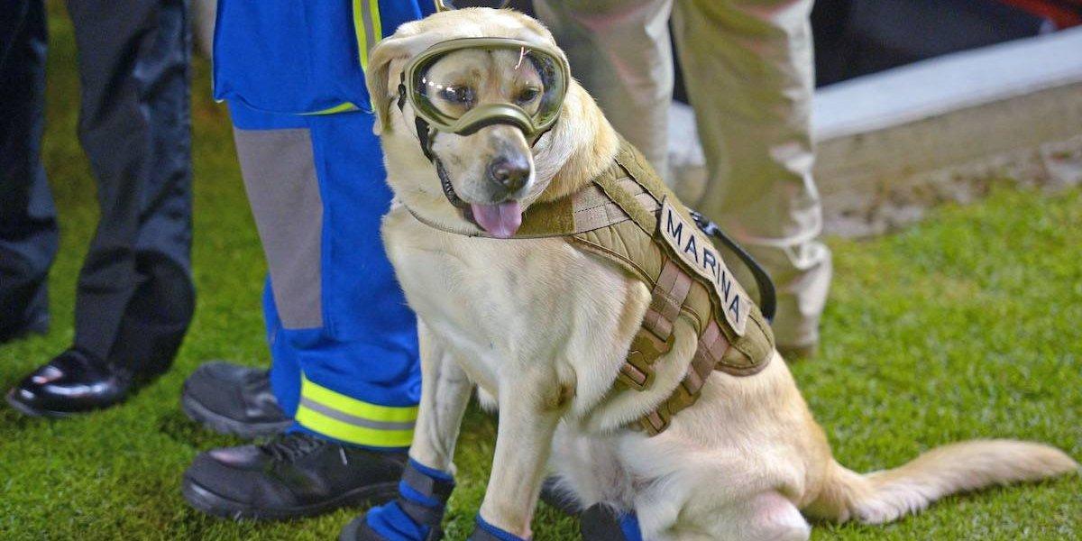 Diablos Rojos realizará monumento a Frida y perros rescatistas