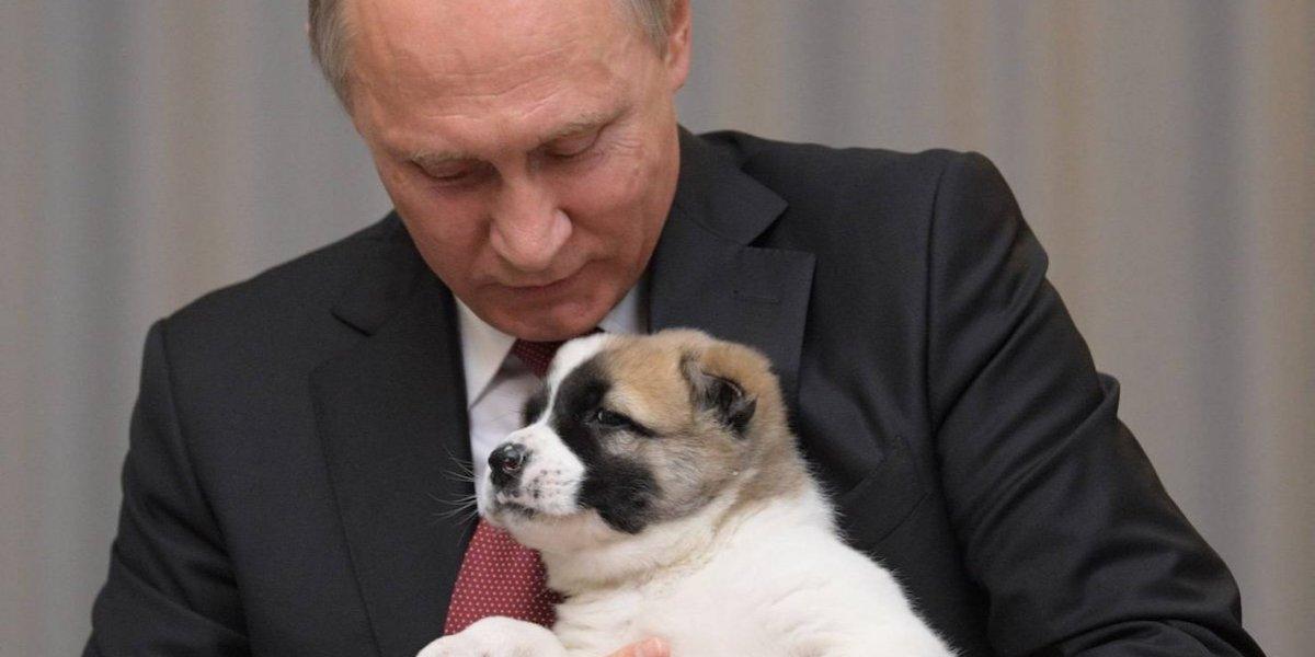 Vladimir Putin recibió un perrito de cumpleaños, se llama 'Verny'