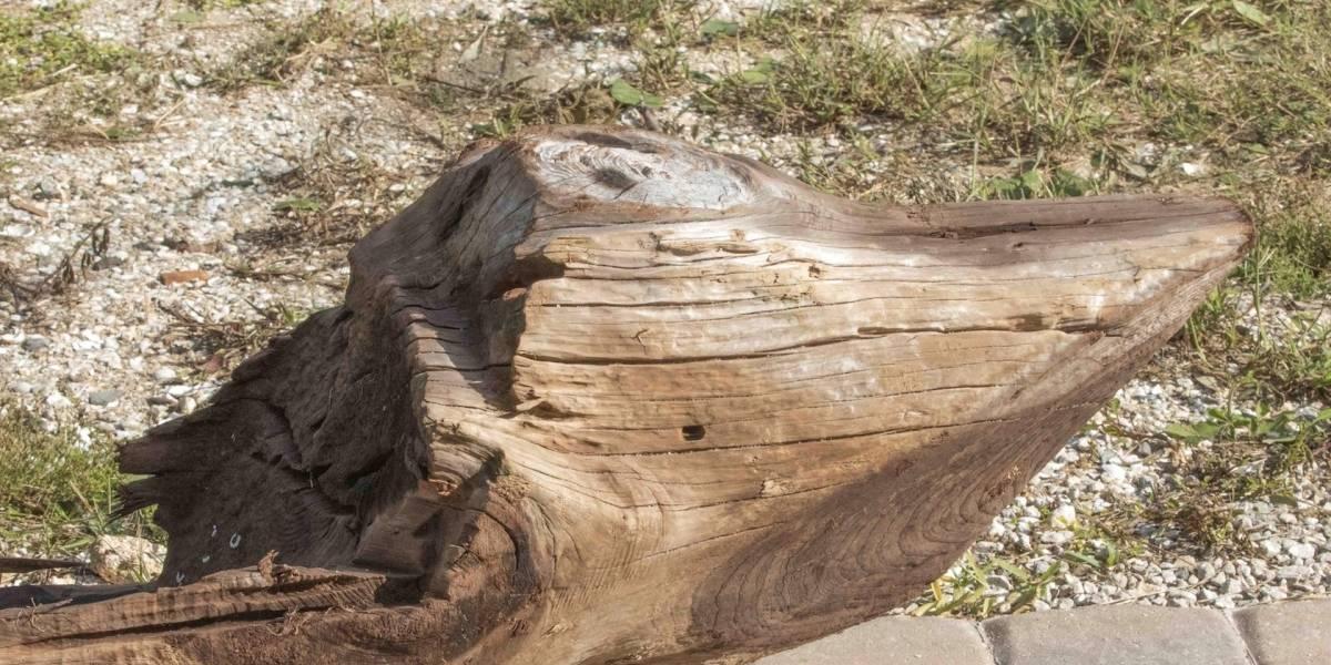 Canoa de madera hallada en Florida tras Irma puede ser de siglo XVII