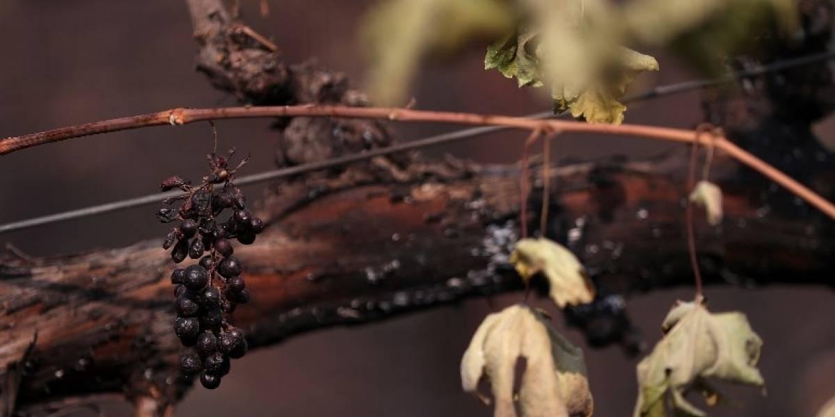 Industria del vino de California sufre con los incendios forestales