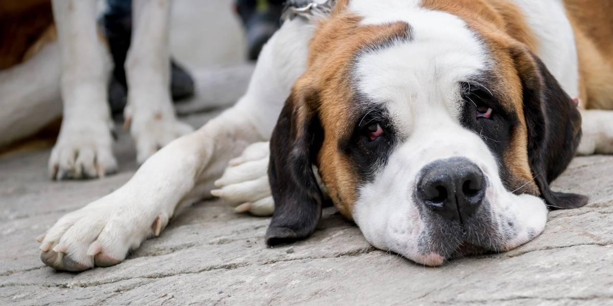 ¿Podría pasar en Chile? Trabajadora italiana obtiene dos días de licencia para cuidar a su perro enfermo