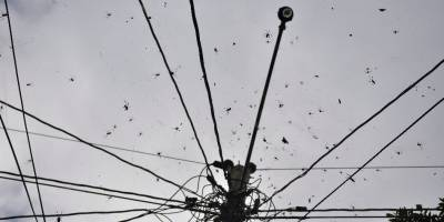 Arañas de aldea Los Verdes