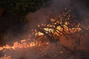bomberosbuscanvictimasincendioscalifornia5.jpg