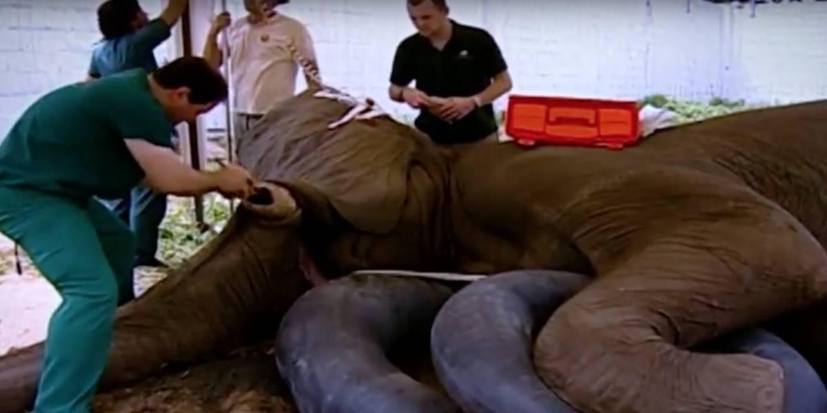 Zoológico colombiano recauda fondos para llevar a elefante al dentista