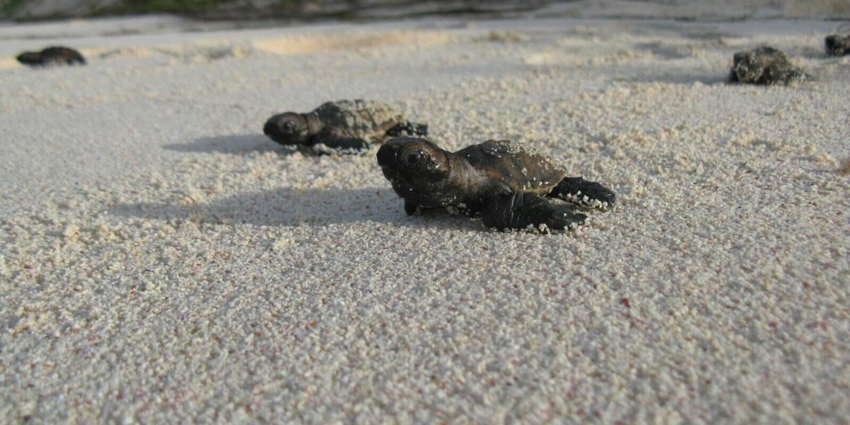 Harán recogido de escombros cuidadoso para preservar hábitats de tortugas marinas